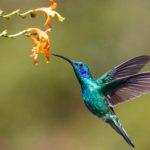 Hummingbird poem